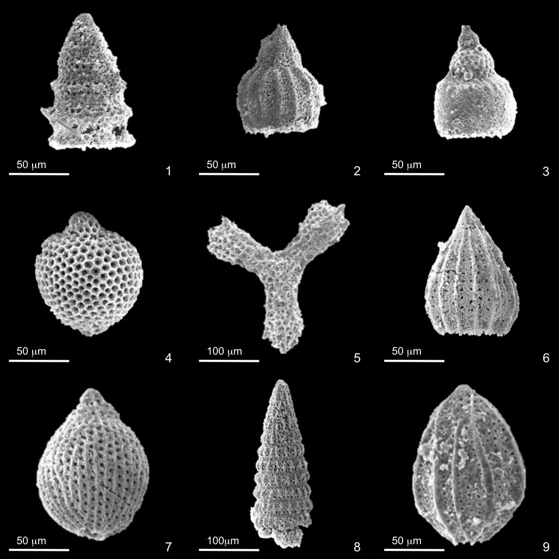Radiolarian Biostratigraphy And Paleoenvironments